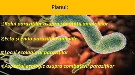 Tipuri de paraziti si simptomatologie Paraziti intestinali ...
