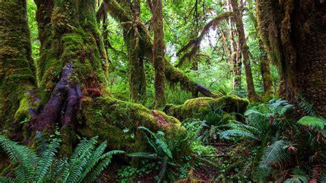 Rainforest Animals Wallpaper - tropical rainforest 4k ultrahd wallpaper wallpaper