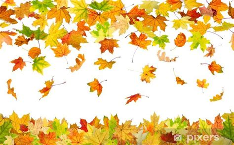 Falling Leaves Live Fall Backgrounds by Seamless Pattern Of Falling Autumn Leaves On White