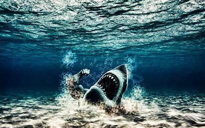 Sharks Underwater Wallpoper