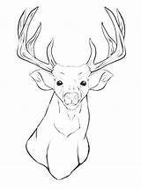 Mule Coloring Pages Deer Getcolorings Printable Head Animal sketch template