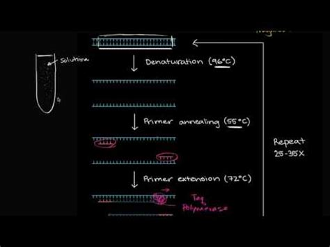 polymerase chain reaction pcr video khan academy