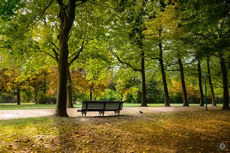 fall   park background high quality  backgrounds