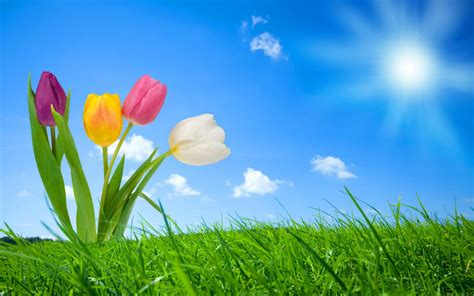 spring nature wallpapers hd wallpapers id