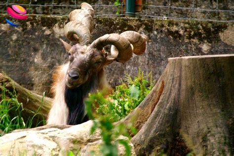 ingresso zoo di pistoia zoo di pistoia gestione famigliare e progetti internazionali