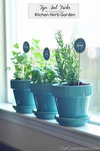 Tips and tricks to maintaining an indoor kitchen herb for Kitchen herb planters
