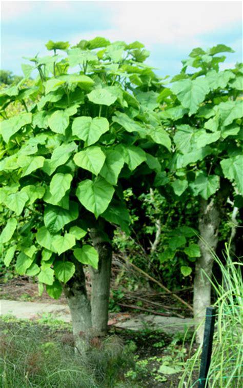 Klein Bleibende Bäume by Baum Mit Gro 223 En Bl 228 Ttern Panoramio Photo Of Bergpark Baum
