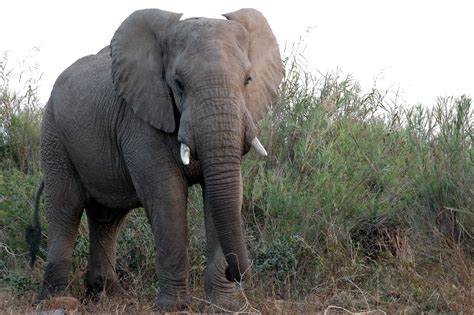 Christian Ryan The Elephant's Call For Love. Cost For Basement Waterproofing. How To Reduce Radon In Basement. Basement Bathtub. Cost To Install Bathroom In Basement. How Do I Waterproof My Basement. Ideas For An Unfinished Basement. Epoxy Floor In Basement. Bad Smell In Basement