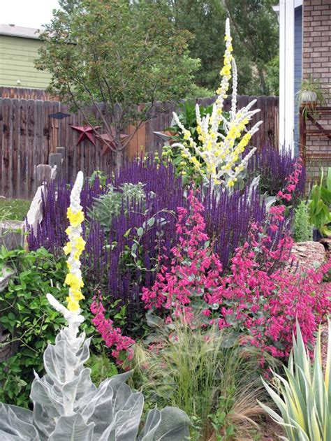 best plants for xeriscaping xeric irrigation landscaping network
