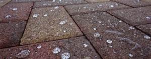 Imprägnierung Pflastersteine Test : reinigung impr gnierung von beton und pflastersteine ~ Michelbontemps.com Haus und Dekorationen