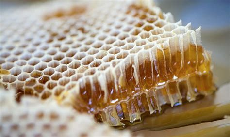 Use   History: Honey and Honeycomb   Healdsburg SHED