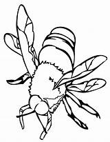 Coloring Insect sketch template