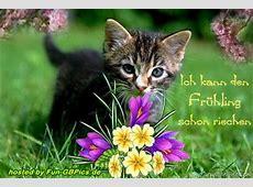 Frühlings Pinnwand Bilder Grüsse Facebook BilderGB