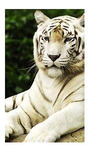 HD Animal Wallpapers