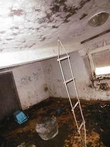 Wohnung Unter Wasser Was Tun : tierqu lerei ~ Markanthonyermac.com Haus und Dekorationen