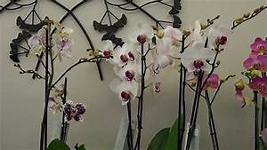 Comment Soigner Une Orchidée : comment entretenir une orchidee ~ Farleysfitness.com Idées de Décoration