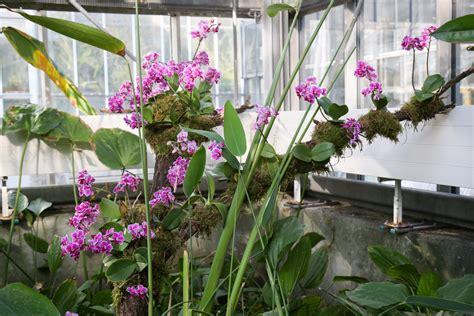 Orchideenschau Botanischer Garten München 2018 by Orchideenschau 2018 Im Boga Leipzig 187 Majas Pflanzenblog