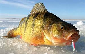 Go Small Or Go Home  10 Great Small Lakes For Ice Fishing