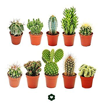 succulent plant symbolism the meaning and symbolism of the word 171 cactus 187