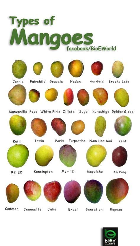 recettes cuisine philippines la mangue non les mangues il faut toutes les goûter à