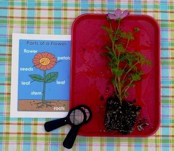 parts   flower science exploration  preschool