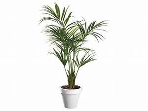 Plante Suspendue Intérieur : plante artificielle d 39 int rieur kentia pot contact maxiburo ~ Teatrodelosmanantiales.com Idées de Décoration