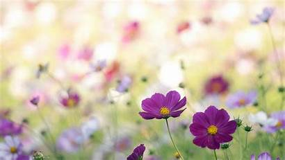 Spring Theme Flowers Wallpapers Natures Wallpapertag Related