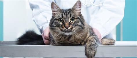 verstopfung bei katzen erkennen und handeln tipps zur