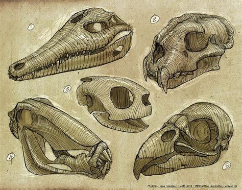 drawn skulls anatomy sketch skulls