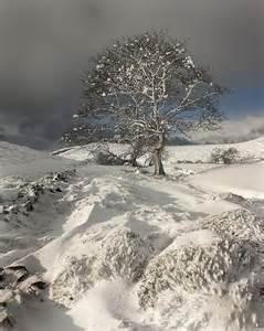 Winter Snow Tree Photography