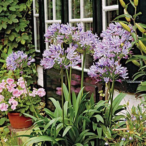 25 unique florida plants ideas on florida