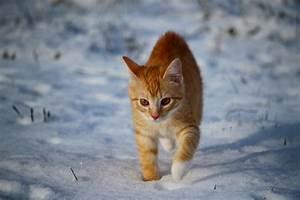 Katze Im Haus Halten : katzen im winter worauf sie achten sollten ~ Lizthompson.info Haus und Dekorationen