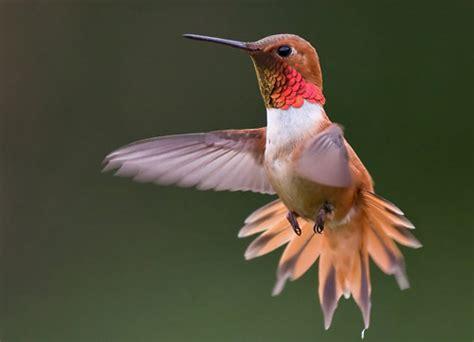 Hummingbird Pictures  Beautiful Pictures Of Hummingbirds