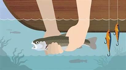 Catch Release Fishing Fix