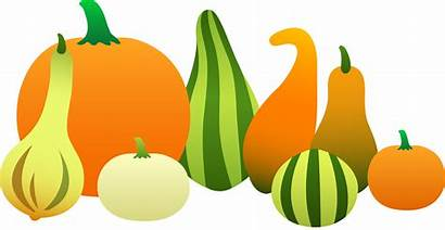 Thanksgiving Harvest Gourds Clip Sweetclipart