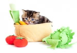 can cats eat cherries fruits veggies and nuts that cats can eat petfoodia