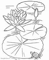 Coloring Pages Pond Adults Turtle Fish Lotus Real sketch template