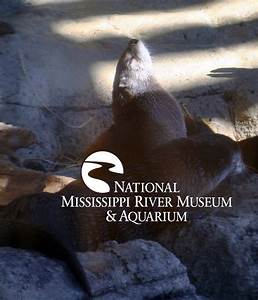 1000+ images about River Life @ the Museum & Aquarium on ...