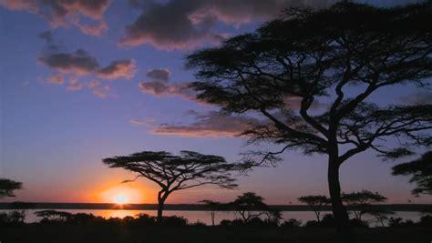 gorgeous  majestic shot  sunrise   african