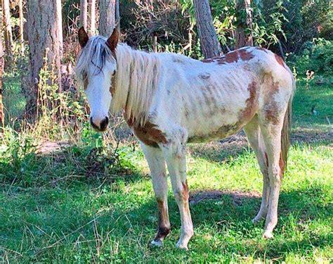 Skinny Horse
