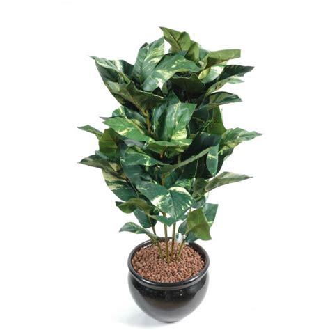 bureau en gros boucherville plante verte tombante interieur 28 images plante