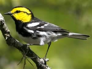 Texas Endangered Birds List