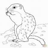 Groundhog Coloring Sheet Ground Preschool Activities Sheets Moose sketch template