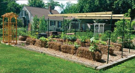 Where To Buy Straw Bales For Gardening by Solve Your Soil Issues With Straw Bale Gardening The