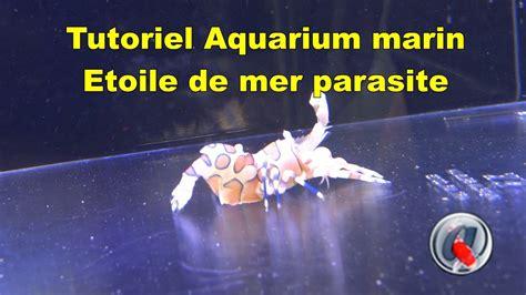 etoile de mer aquarium tutoriel aquarium marin 233 toile de mer parasite