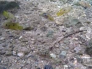 Fische Für Anfänger : warmbach tropenparadies f r fisch exoten orf k rnten fernsehen ~ Orissabook.com Haus und Dekorationen