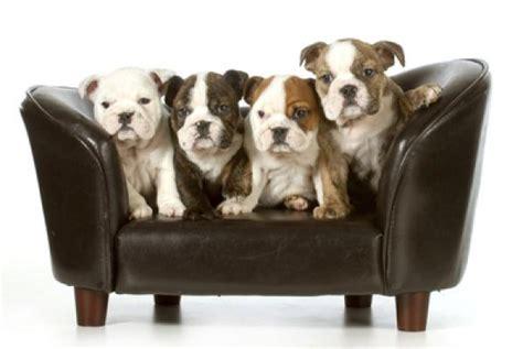 canapé pour grand chien photos canapé pour chien