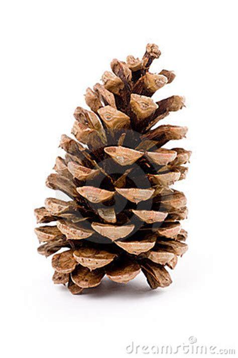 sequoia cones clipart clipground