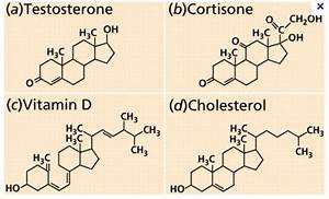 Flashcards Table On Bio  Carbon Molecules