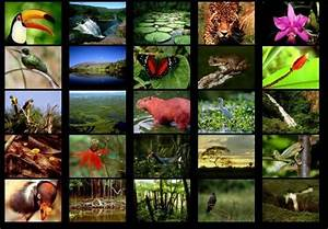 Rainforest+Animals | List ten things you would find in the ...
